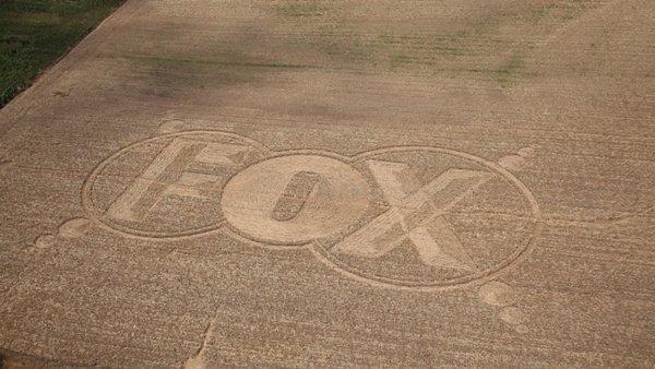 Fox cerchi nel grano